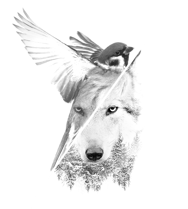 home page 2018 sparrow wolf